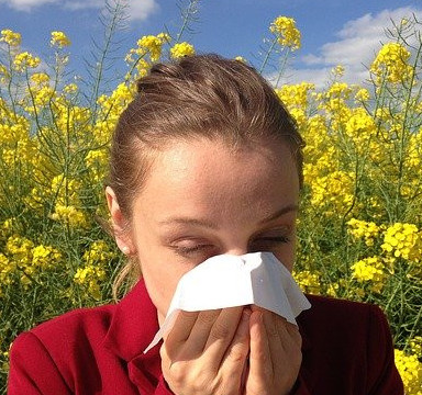 Natural Hay Fever Cures – Try Spirulina